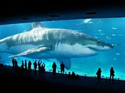 plane of living dead with Megalodon Sharks Still Lives Evidence That Megalodon Is Not Extinct on Bluemax furthermore Nasa Releases High Definition Image Of Earth together with Underwater airplane wreckage additionally Rickyriffle blogspot also 439241769882249255.
