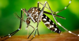 10 home-made anti-itch remedies for mosquito bites