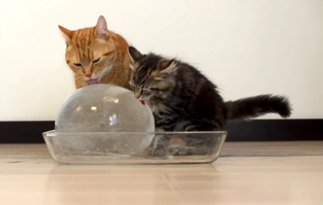 10 Cats to Enjoy Ice Ball