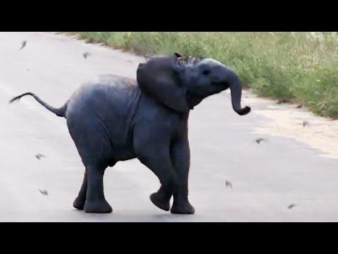 Baby Elephant Calf vs Birds