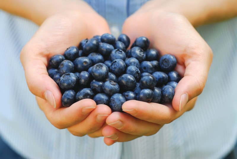 """Superfruit"" Blueberries Help Prevent Alzheimer's Disease, Scientists Reveal"