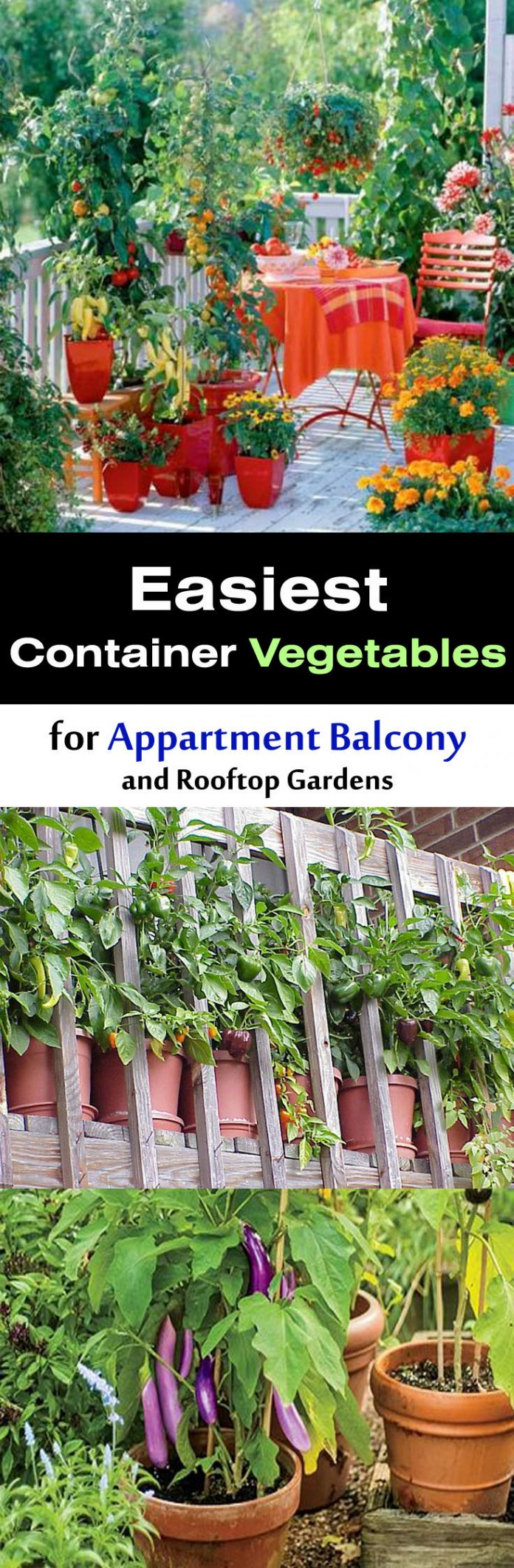 easiest-container-pot-vegetables-for-appartment-balcony-696x2122[1]