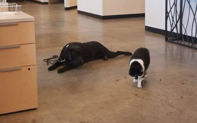 A Cat Named D-O-G Trains Pups to Be Service Dogs