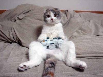 Cat which won't let play Video Games anyone