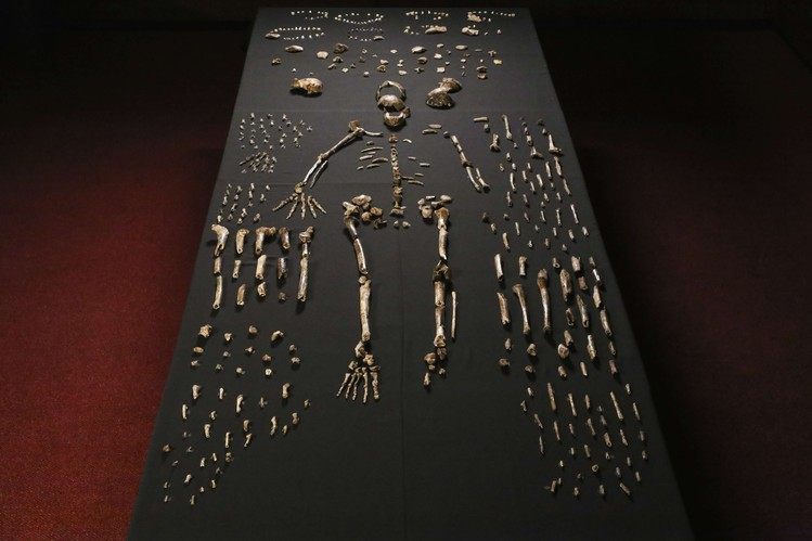 New human ancestors were found in South Africa. This can rewrite our history!
