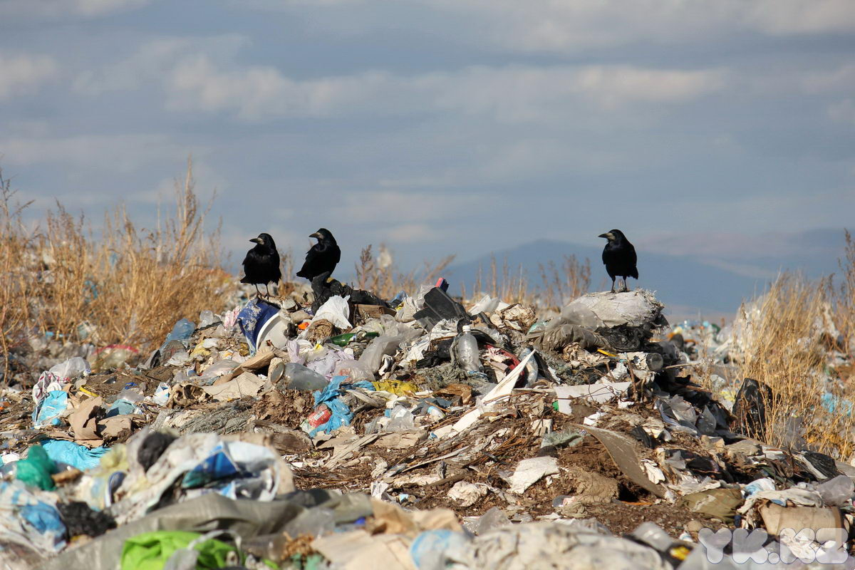 In Sweden, there is lack of its own waste. This country will take it from the neighbours!