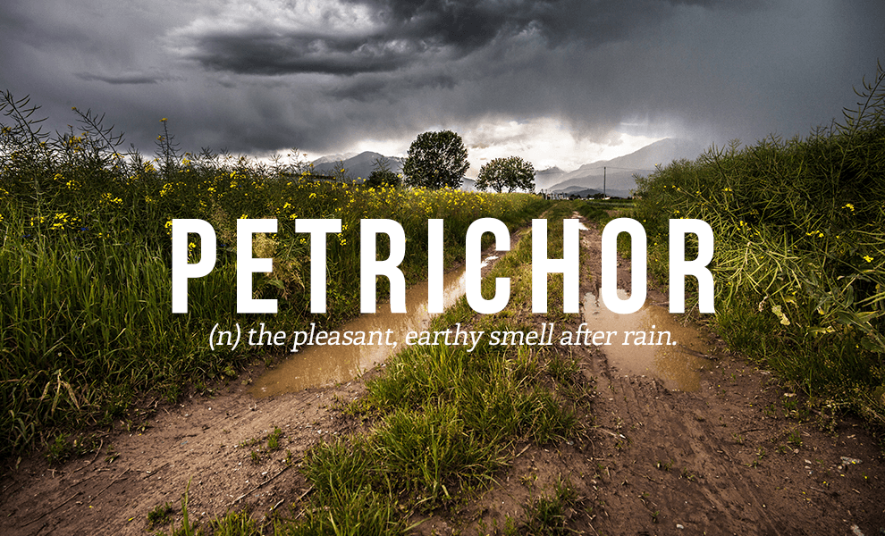 100 Most Beautiful Words Of The English Language