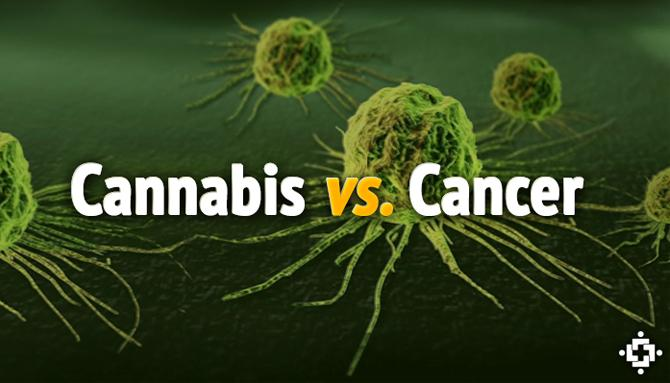 Watch How Cannabis Beat The Cancer! The True Video!