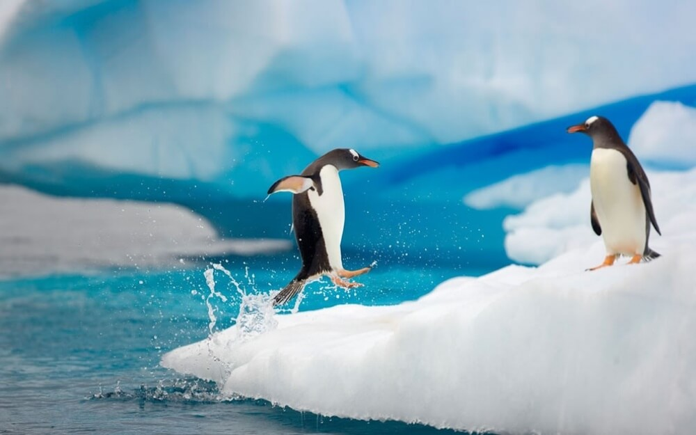 20 photos which will convince you that penguins are totally awesome