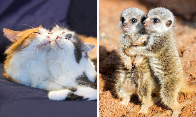 15 images of the cutest brothers and sisters who totally adore each other