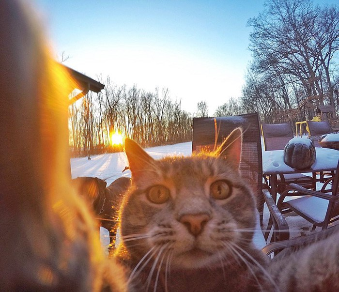 This Cat Loves Taking Selfies With His Friends And No One Knows How He Does It