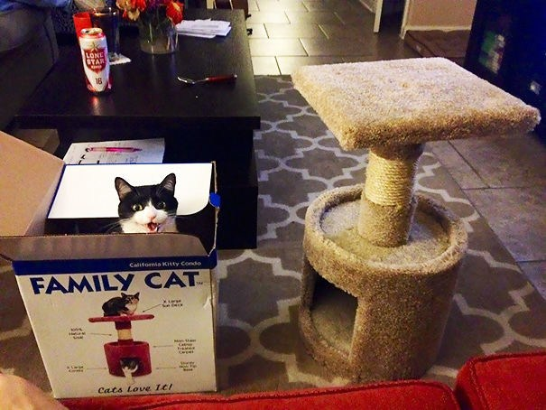 15 Frustrating Pictures Of Pure Cat Logic