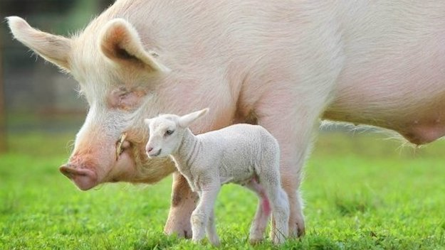 400 Million Fewer Animals Were Killed for Food Last Year vs. 2007 Because People Are Eating Less Meat