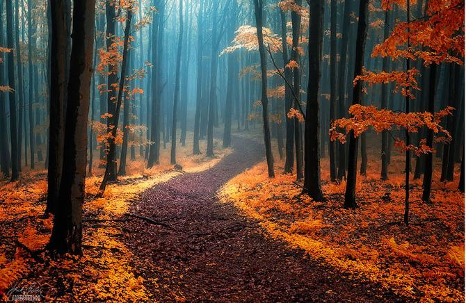 10 Mystical Forests Everyone Needs To Visit