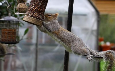 These Angry Squirrels Can Teach Us a Lot About Perseverance (Video)