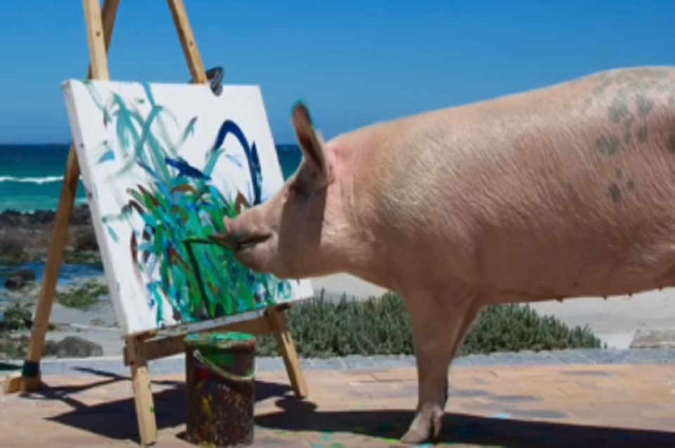 Watch Pigcasso The Pig Paint To Help Her Fellow Farm