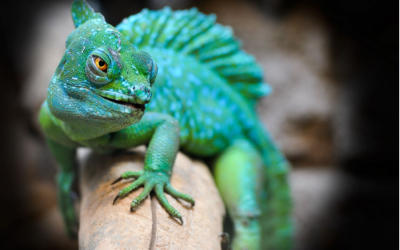 Iran Official Claims The West Used Lizards to Spy on our Nuclear Power Plant