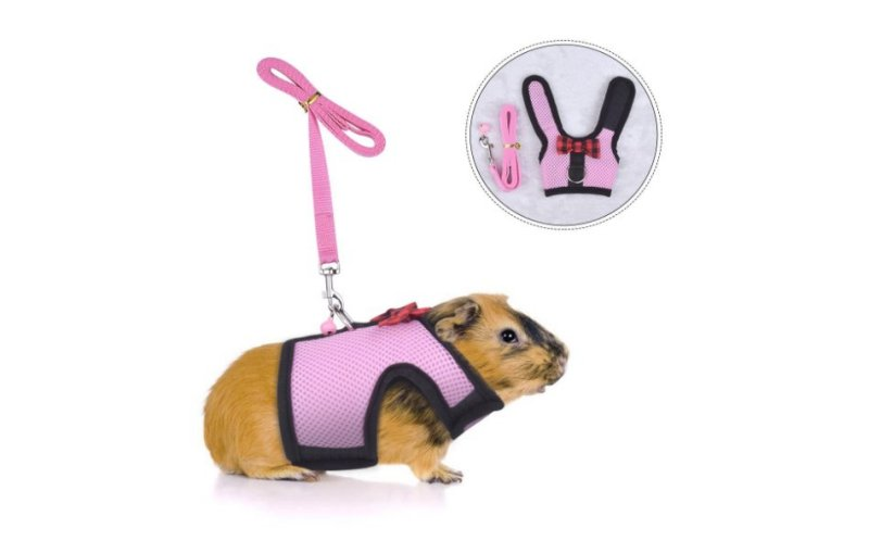 Product photo: Guinea Pig Harness and Leash