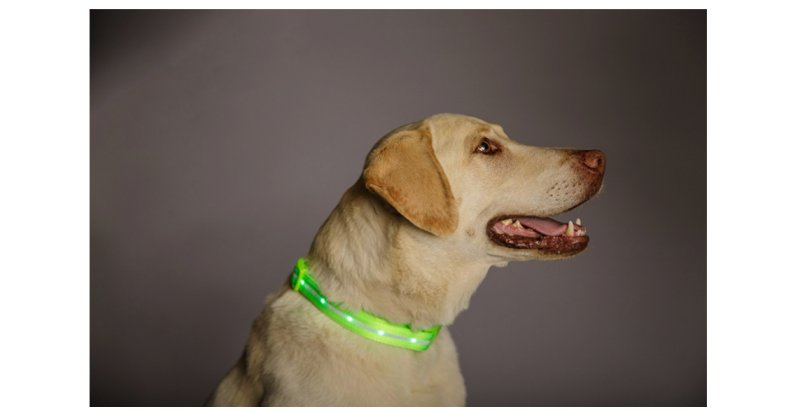 Product photo of dog wearing Blazin Safety LED Dog Collar.