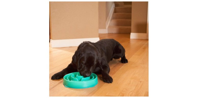 Product photo of fun Feeder Slow Feed Dog Bowl
